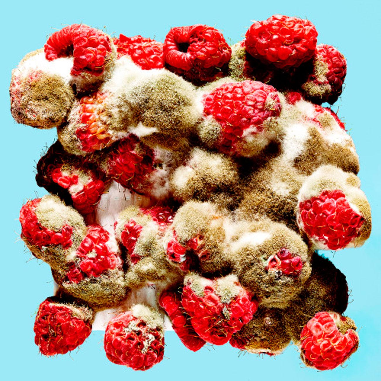 rotten raspberries bobby doherty